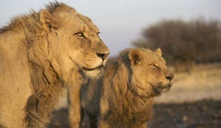 Hayvanlarla Öğleden Sonra Animal Planet'te Başlıyor