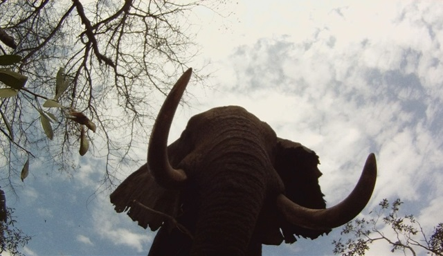 Afrika'nın Ölümcül Avcıları  2. sezonu ile Nat Geo Wild'da!