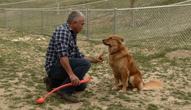 Köpeklere Fısıldayan Adam Cesar Millan özel bölümleriyle Nat Geo People'da!
