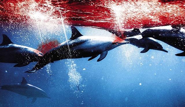 The Cove: Oluk oluk kan akıyor, yunus katliamı devam ediyor!