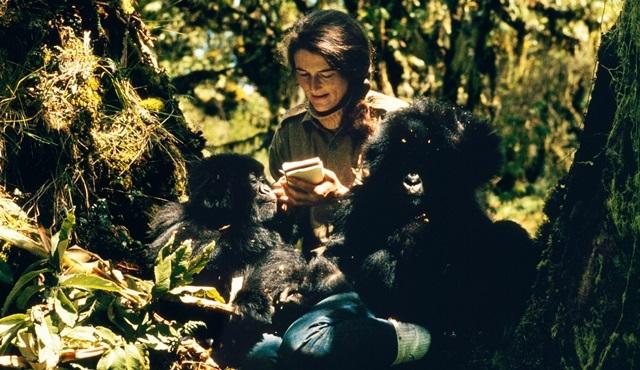 National Geographic'in yeni serisi Dian Fossey, 3 Aralık'ta başlıyor!