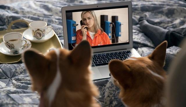 Netflix, evcil hayvanlarla birlikte izlenen diziler listesi yayınladı